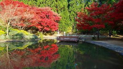 大阪池田市の紅葉・十月桜・ウォンバット(3) 久安寺の紅葉 その3。