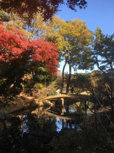 2018年12月 東京散策㉑ 紅葉の六義園