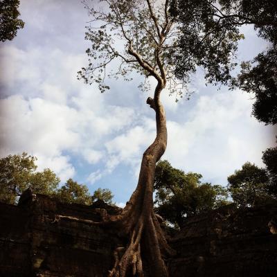 タプローム寺院とバイヨン寺院の静かな見学時間について
