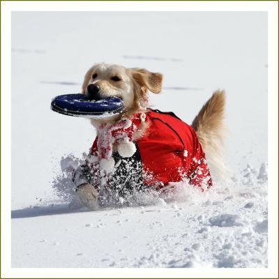 Solitary Journey[1152]雪国から…白銀の世界、犬は喜び駆け回る~♪と言っても中国山地からです。<八幡高原>広島県北広島町