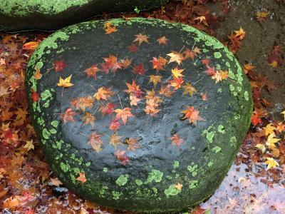 時雨降る中に紅葉真っ盛りの小石川後楽園をぶらぶら