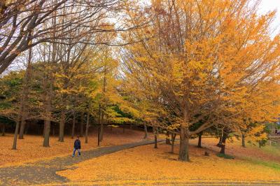 神奈川遅めの秋散歩~三渓園・根岸森林公園・旧一等馬見所~