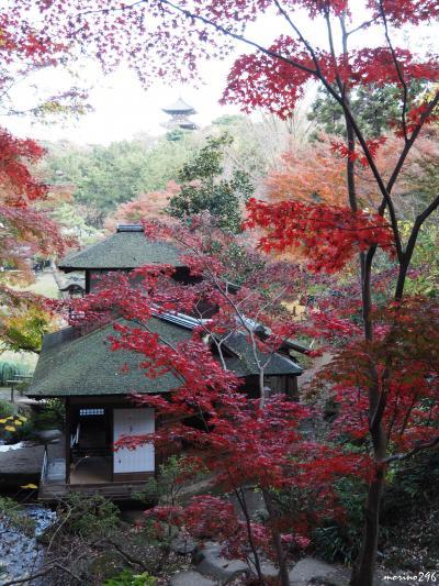 横浜三渓園の紅葉、やはり今年は・・・。