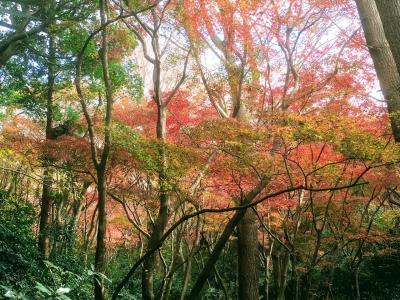 鎌倉の獅子舞の谷と瑞泉寺、鶴岡八幡宮の紅葉(まだ青い)