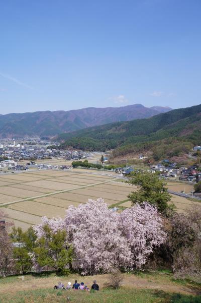 ●桜を見に松本の弘法山古墳へ