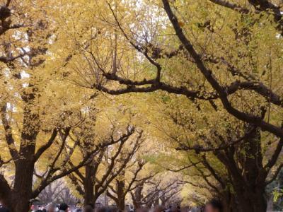 駅からハイキングで神宮外苑界隈のいちょう並木などを巡る2018①~神宮外苑いちょう祭りと見事な並木~