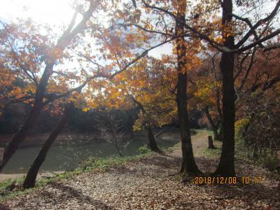 善師野から犬山までのハイキング (熊野神社、大洞池、東海道自然歩道、不老滝、寂光院)
