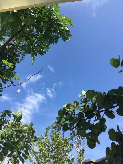【バリ島】6度目のバリは、気分を変えてサヌール→ウブド→サヌール(9日目)~帰国日、最後までプールサイドでごろごろ。雨季なのにこの天気♪ジャカルタ経由初めてのスカイトレイン乗車~