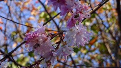 紅葉真っ只中の須磨浦離宮公園 その1。