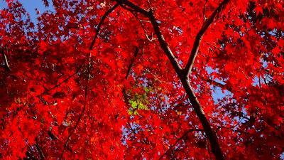 紅葉真っ只中の須磨浦離宮公園 その2。