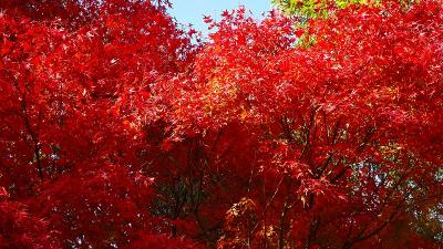 紅葉真っ只中の須磨浦離宮公園 その3。