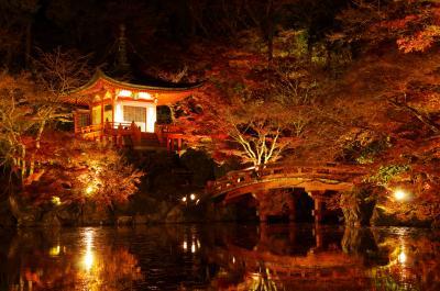 10年ぶり!修学旅行以来の京都で見ごろの紅葉を!