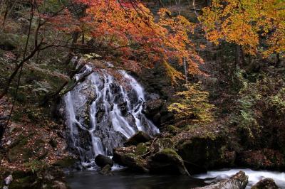 ◆晩秋の鮫川~名残り紅葉の江竜田の滝巡り