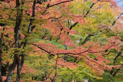 美しい彩りの香嵐渓もみじ 2018 ~とよたおいでんバスでゆく~(愛知)
