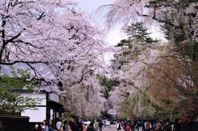 5.大曲から角館へ、桜を見に