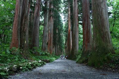 戸隠のパワースポット大杉並木