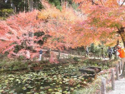 モネの池・大谷田神社の紅葉!