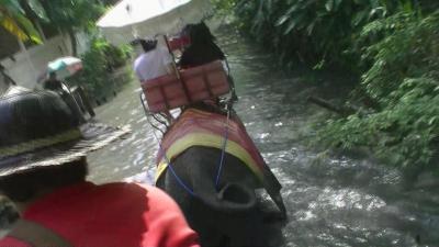 amazing THAILAND! (4)エレファント・ビレッジで象乗りトレッキング体験・・・