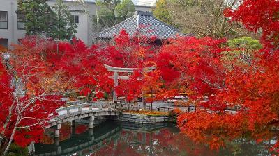 京都市 禅林寺 (永観堂)の紅葉 その1。