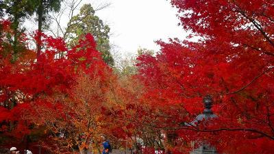 京都市 禅林寺 (永観堂)の紅葉 その2。