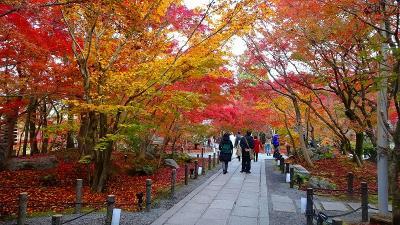 京都市 禅林寺 (永観堂)の紅葉 その3。