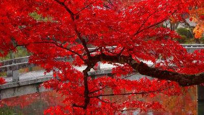 京都市 禅林寺 (永観堂)の紅葉 その5完。