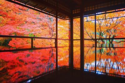 京都紅葉散歩2018~瑠璃光院から哲学の道まで~