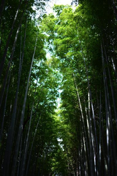 京都一泊二日一人旅!