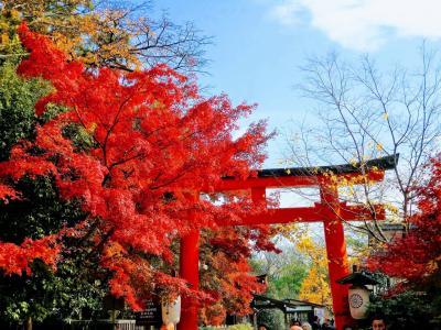 大阪・京都 紅葉巡りの旅