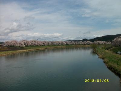 圧巻!!一目千本桜🌸