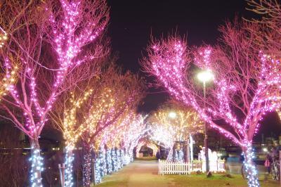 平成最後のフルタ製菓のクリスマスセールで爆買いからの、狭山池公園のイルミネーション
