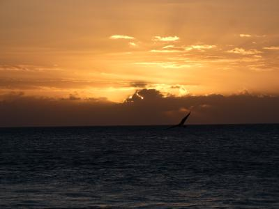 フロリダ キーウエストその2 (Key West, Florida)