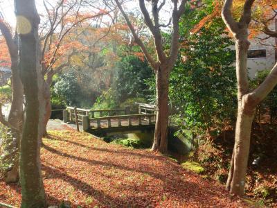 鎌倉 行く秋「明月院通りの紅葉」