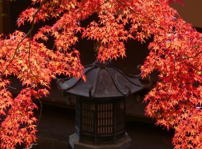 「崇禅寺」の紅葉_2018(2)_11月下旬、見頃になりました。(群馬県・桐生市)