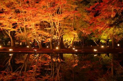 愛知の紅葉の名所に行ってみました。(小原の四季桜、香嵐渓、曽木公園)