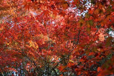 秋の京都 色づき始めの紅葉スポットを2泊3日で(2)詩仙堂から圓光寺