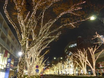 2018年イルミネーションの第7段は☆☆表参道通りのケヤキ・イルミネーション2018☆☆ !!O(*^-^*)O