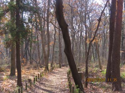 久しぶりに森のさんぽ道を散策しました