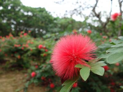 由布島の観光。林あり,植物園あり,ちょうちょの園あり。盛りだくさん。良いところです。