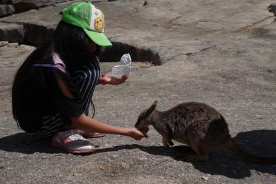 ケアンズ旅行記3日目(2):初めてのオーストラリアはマリーバから。~Granite Gorge】子供2人とおばあちゃんを連れて・・・完全個人手配で楽しみ尽くすぞ♪