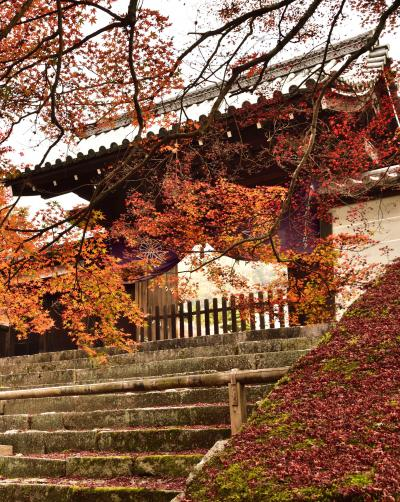 洛北の紅葉はやはりここか! (^^♪ 曼殊院門跡から圓光寺へ散策