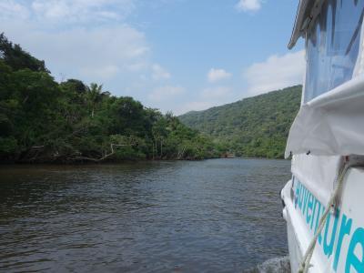 仲間川のジャングルクルーズ。マングローブの林をぬって。いいクルーズでした。