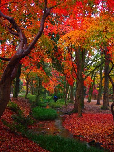 京都のおうどんと鯖寿司と下賀茂神社・糺の森の紅葉