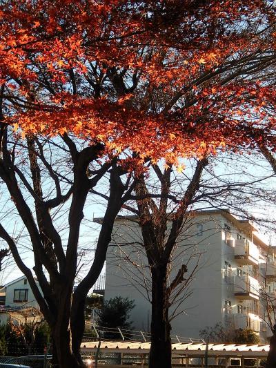 西鶴ケ岡公園の残り紅葉