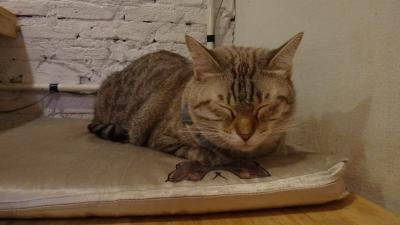 バンコクで猫カフェに行ってみた