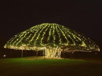 2018年旅おさめ。~宮古島でクリスマス、夫婦忘年会~①