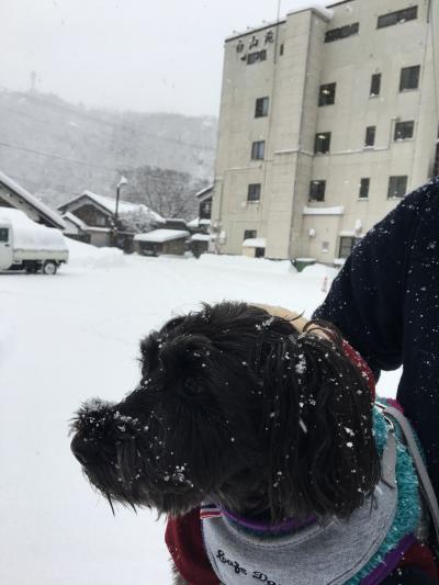ワンコと一緒旅2018年冬★帰省途中の白峰温泉「白山苑」