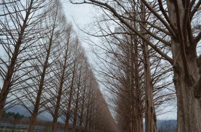 歳の暮れ、琵琶湖を一周しました(その一)
