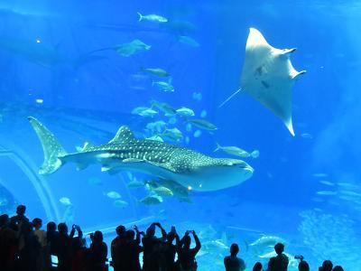 人生初なのに…沖縄は今日も雨だった~4日目/美ら海水族館