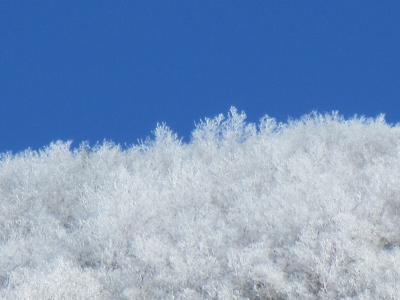 霧氷~赤城山